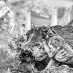 Wildschwein und Jagdhund