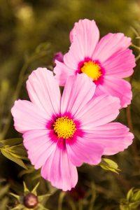 Blumen im französischen Barockgarten