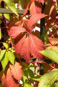 Herbstliche Färbung im August - Schlossgarten Schwetzingen