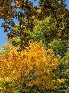 Herbstwald auf dem Auerberg- Auerbacher Schloss
