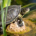 Sonnenbad im Schildkrötendorf