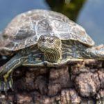 Im Schildkrötendorf in Frankreich