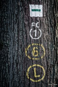Wegmakierungen an einem Baumstamm