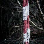 Überbleibsel im Wald