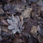 Getrocknetes Laub im Wald