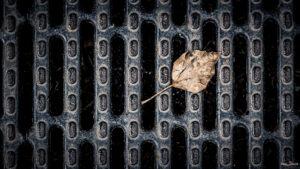 Vertrocknet - Blatt auf einem Kanaldeckel